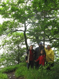 Wildcat_island_lookout_tree_1
