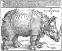 300pxdrer_rhino_full
